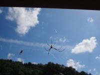 クモとクモ